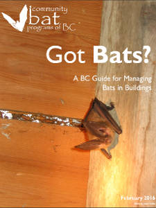BC Bats in Buildings