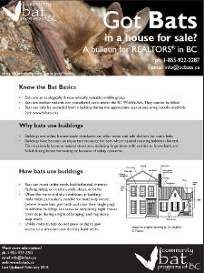 BC Got Bats? For Realtors