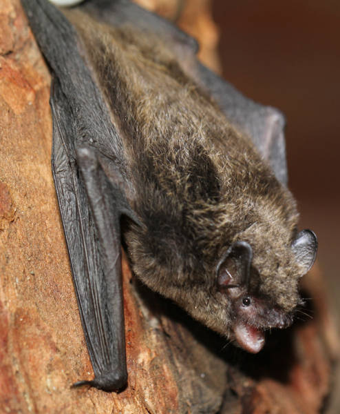 Contact Alberta Community Bat Program