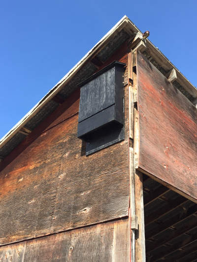 Multi-Chambered Bat House Picture